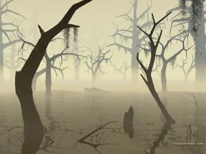 inspirationTransforming - swamp